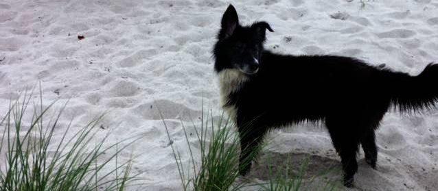 Volkswagen – Bulli T6 unterwegs mit Hund